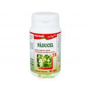 Paducel 40 CPS - Favisan