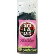 Chimen negru seminte 100 G - Solaris