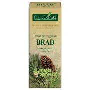 Extract muguri brad 50 ML – PlantExtrakt