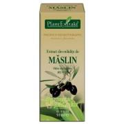Extract mladite maslin 50 ML - PlantExtrakt